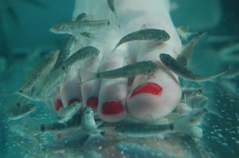 Garra rufa garra rufa vitalift for Fish spa pedicure